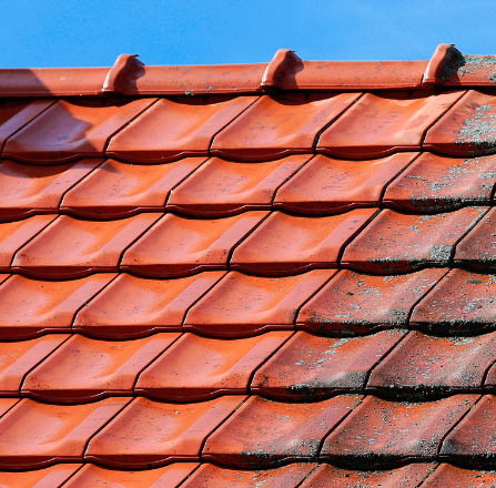 clean lichen free roof tiles vs mossy tiles